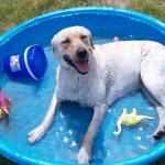 Dog in pool