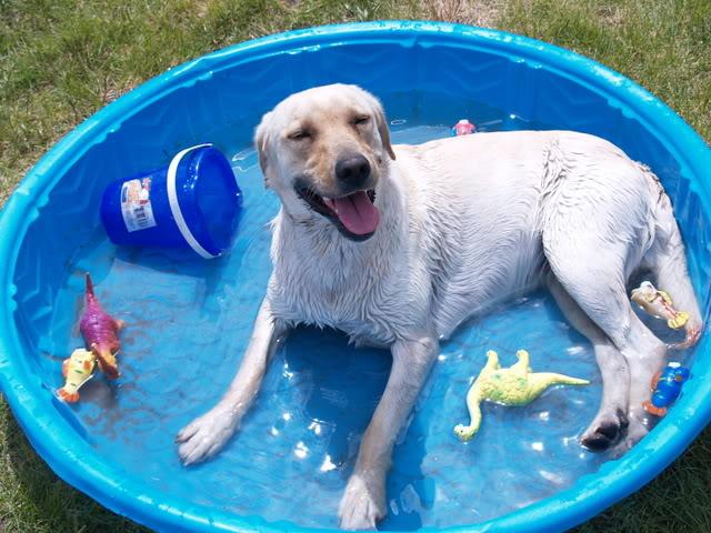 Dog Swimming Pool Toys