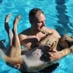Dogs and swimming pool