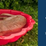 Best Dog Pool Reviews