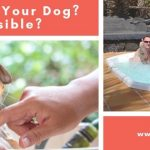 Hot Tub With Your Dog